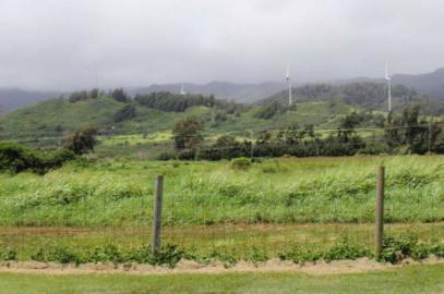 Land Board Green Lights Na Pua Makani Wind Farm
