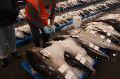 Bigeye Catch Limit Would Nearly Double Under Proposed Rule