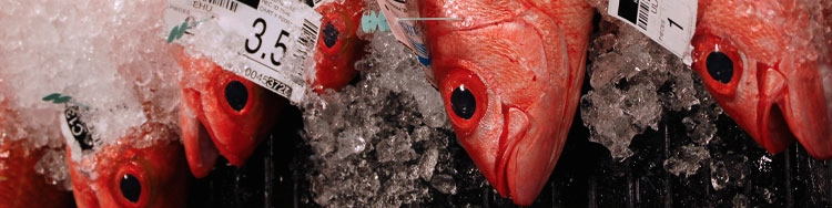 MHI Bottomfish Catch Limit Drops