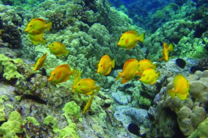 Supreme Court Decision Calls for Suspension of Aquarium Fish Collection