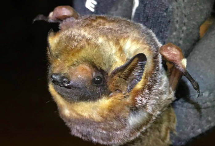 Wind Farm Barely Gets Preliminary OK To Kill 160 Additional Endangered Bats
